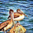 Brown Pelican Pair Portrait by Noble Upchurch