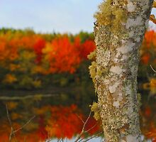 Beauty and the Birch by Kathleen   Sartoris