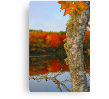 Beauty and the Birch Canvas Print