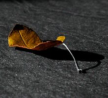 Tinted Leaf by Lee West