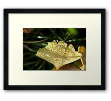 Dew drops on a maidenhair tree leaf Framed Print