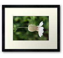 Silene vulgaris flower photography  Framed Print