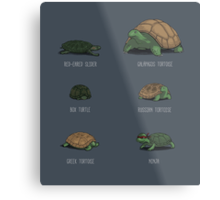 Know Your Turtles Metal Print
