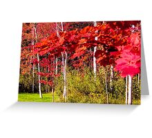 Canadian Maple Greeting Card