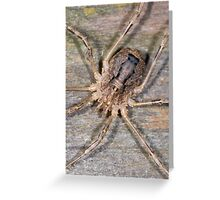 Who You Calling A Spider Greeting Card