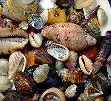 """Ocean Gems"" by debsphotos"