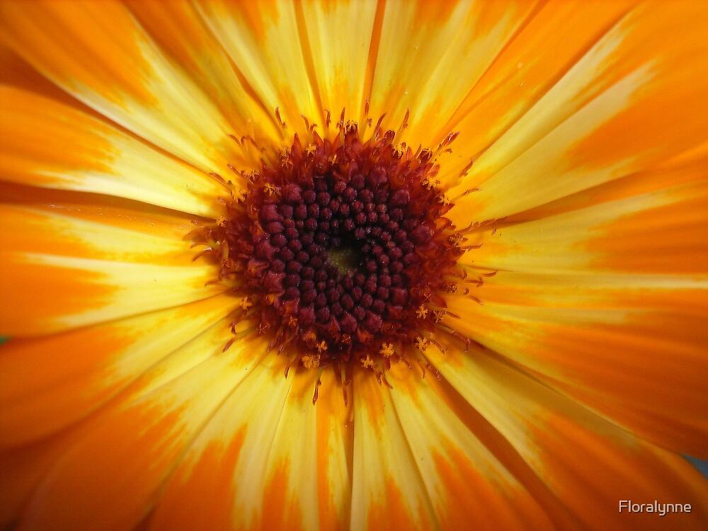 sunburst by Floralynne