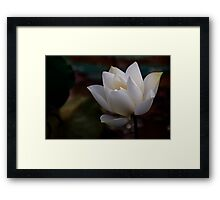 The White Beauty Framed Print