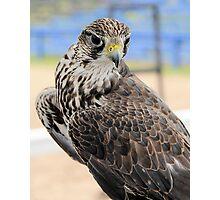 Falcon Breath Photographic Print