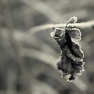 Snow Prince by Nikki Trexel