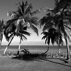 Belize Palm Trees by scottmarla