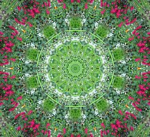 Floral Doily by Laurie Puglia
