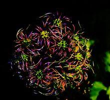 Crazy Bloom by Barbara Gerstner