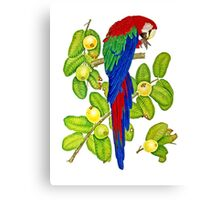 Macaw on Guava Branches Canvas Print