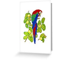 Macaw on Guava Branches Greeting Card