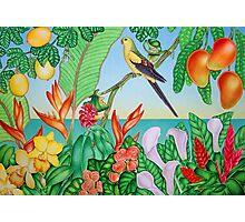 Australian Regent Parrot Photographic Print