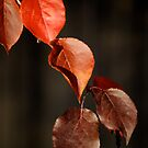 Red Leaves Of Autumn II by Pamela Hubbard
