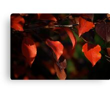 Red Leaves Of Autumn III Canvas Print