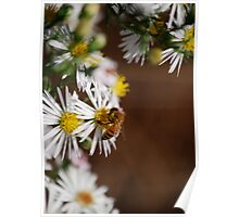 Bee And Wild Flower Poster