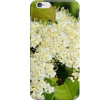 Nannyberry Blossoms iPhone Case/Skin