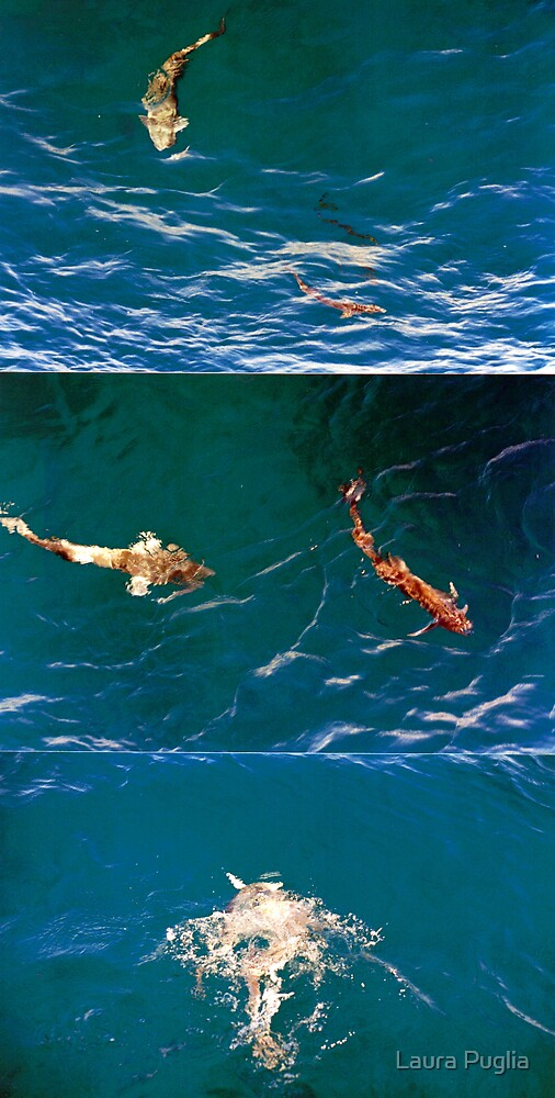 Shark Suckers Near St. Thomas by Laurie Puglia