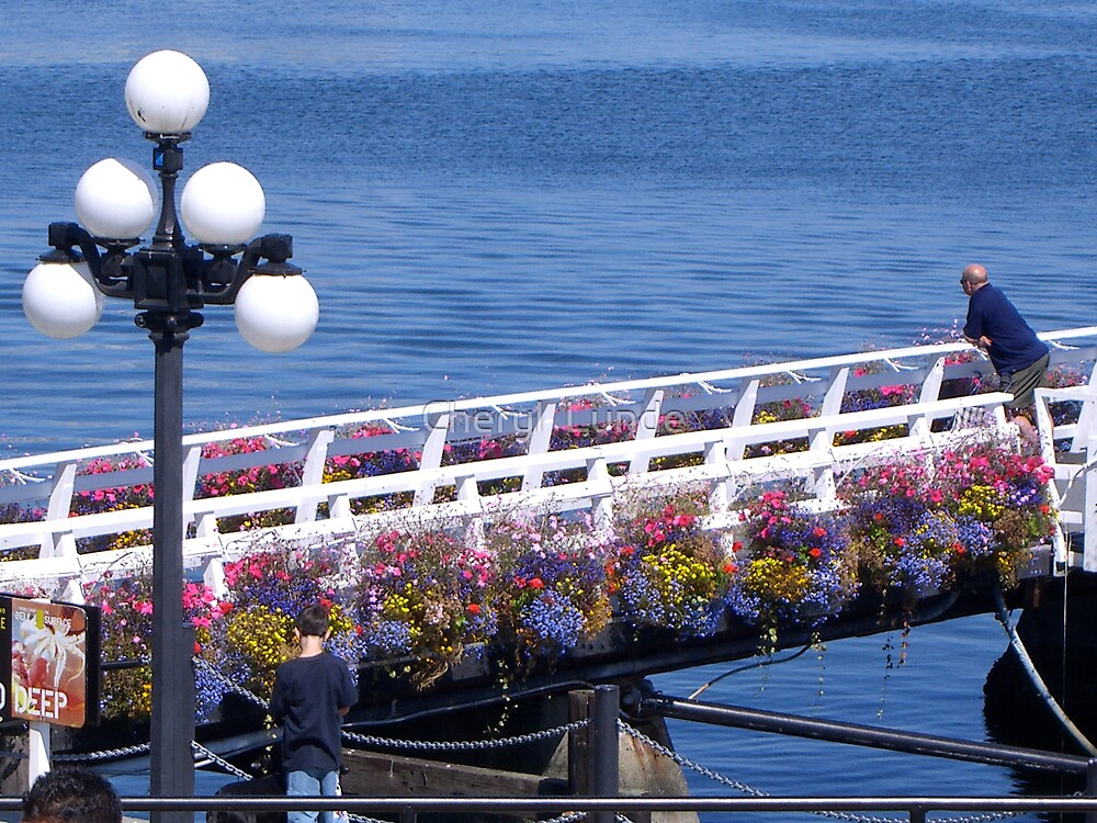 Flower Path by Cheryl  Lunde