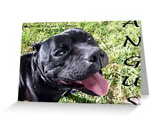 Introducing Angus Greeting Card