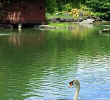 Auburn Botanic Gardens by Penelope Thomas