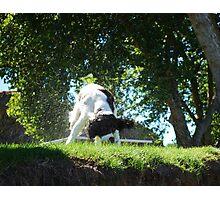 Wet Dog Photographic Print