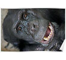 Chimpanze Poster