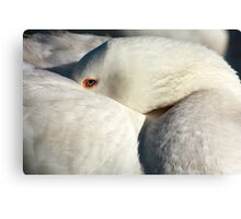Sleeping with One Eye Open Canvas Print