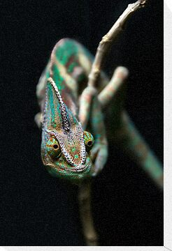 Karma Chameleon by Heather Prince ( Hartkamp )