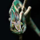 Karma Chameleon by Heather Prince