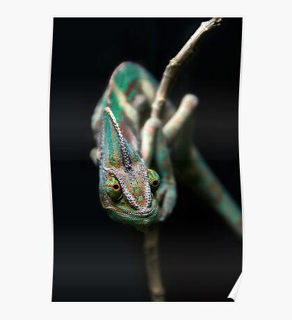 Karma Chameleon Poster