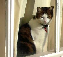 Max at the window by Roz McQuillan
