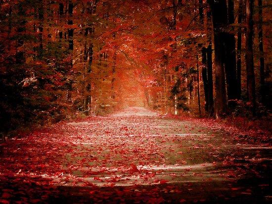 Autumn by Alexandru C.