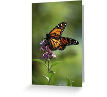 New Zealand Monarch 7 Greeting Card