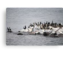 Cormorants on the island of the river Canvas Print