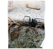 Creepy Crawly Red Back Spider Poster