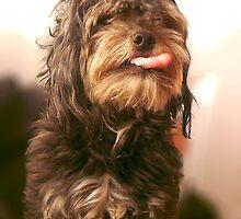 Rude dog  by Roz McQuillan