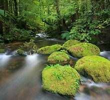 pure green by Donovan Wilson