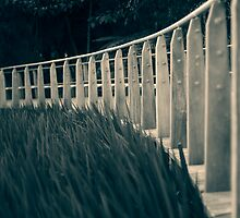 Take a walk with me.... by dgt0011