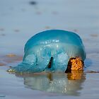 Blue Jellyfish 01 by kevin chippindall