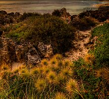 Prickles by John Pitman