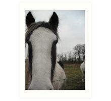 Paint Horse - Piebald Art Print