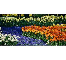 Keukenhof Gardens Photographic Print