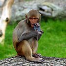 Little Monkey by simonbreeze