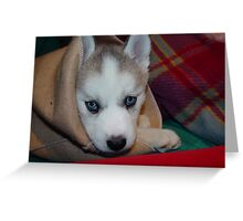 Kozen in da Blanky Husky babe (she died yesterday she was 8 years old Greeting Card
