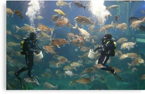 Underwater Wilderness by elsha