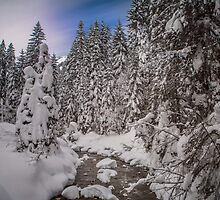 Snow laden trees. by Dave Hare